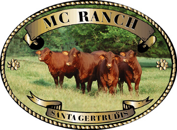 MC Ranch Santa Gertrudis Cattle